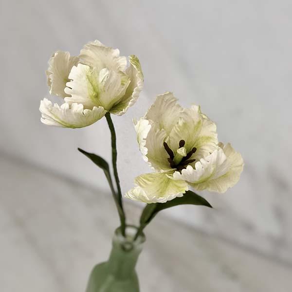 Tulipa Parrot